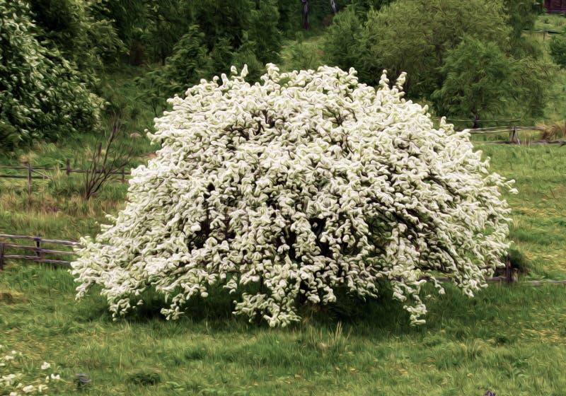Flowering tree on meadow. vector illustration
