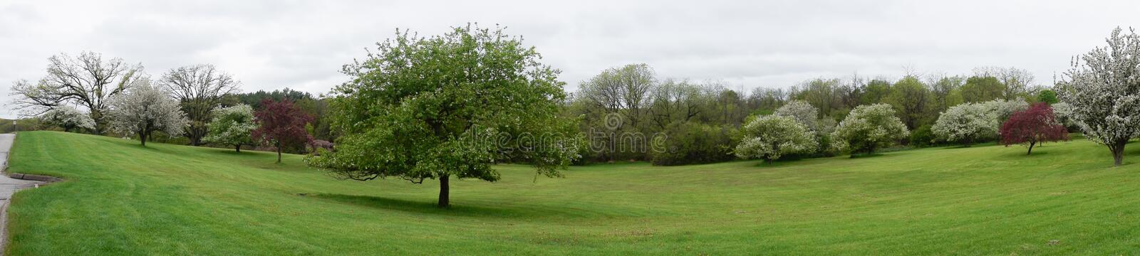 Flowering trees panorama, park in Milwaukee Wisconsin royalty free stock photography