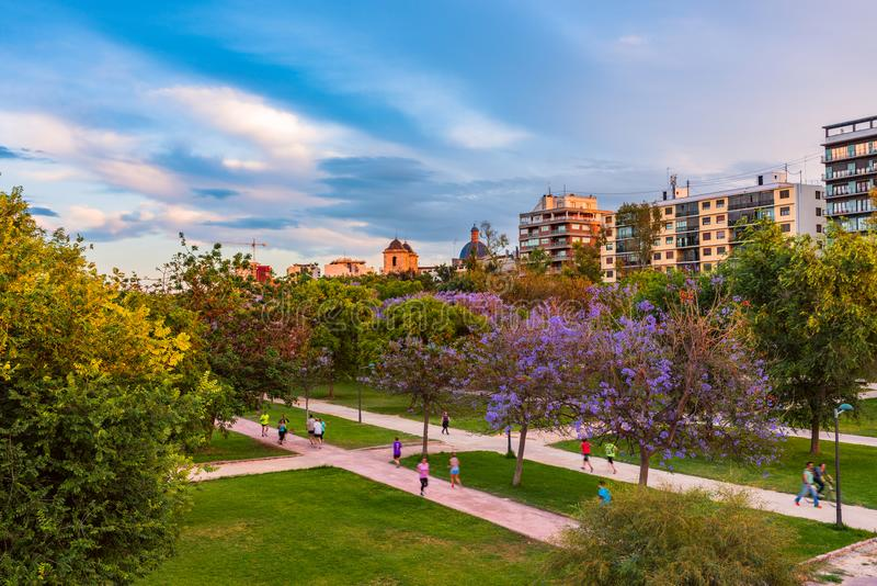 Flowering trees in the park of Turia in the pre-hours. Valencia, Spain.  royalty free stock photography