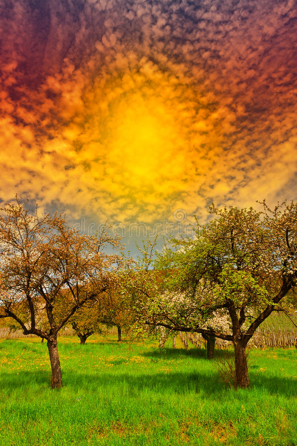 Flowering Trees stock images