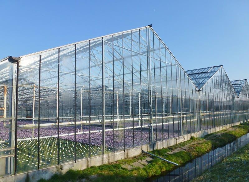 Floweriung植物在玻璃温室 库存图片