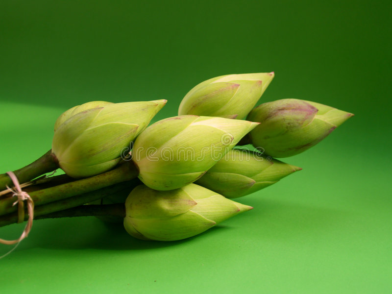 Flowerm 1 del loto imagen de archivo