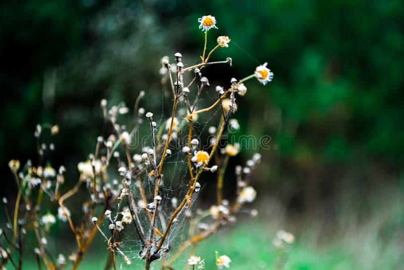 Flowernature fotografia stock libera da diritti
