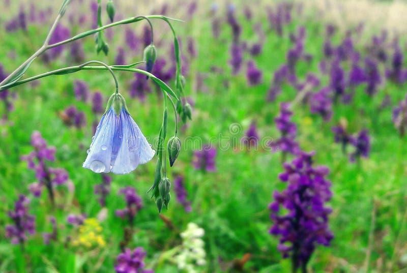 Flowerness fotografie stock libere da diritti