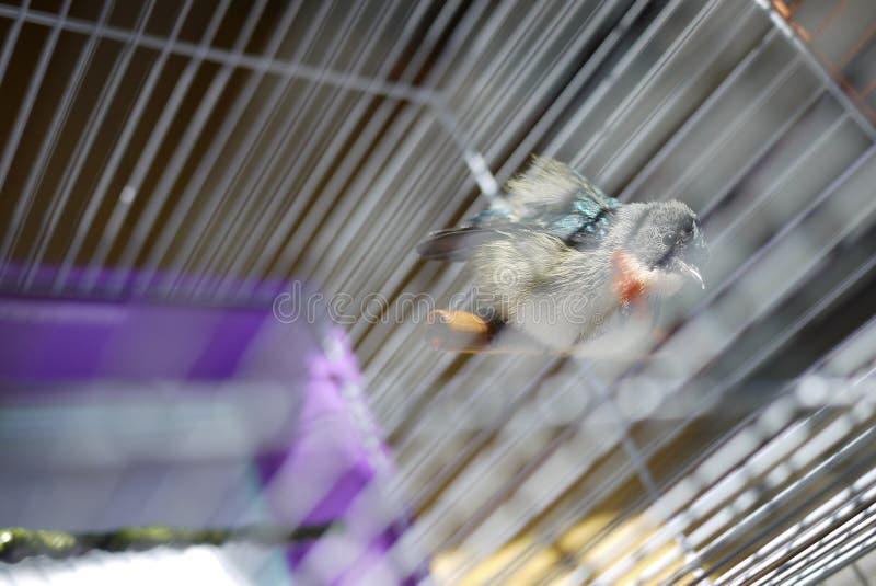 Flowerpecker immagine stock libera da diritti