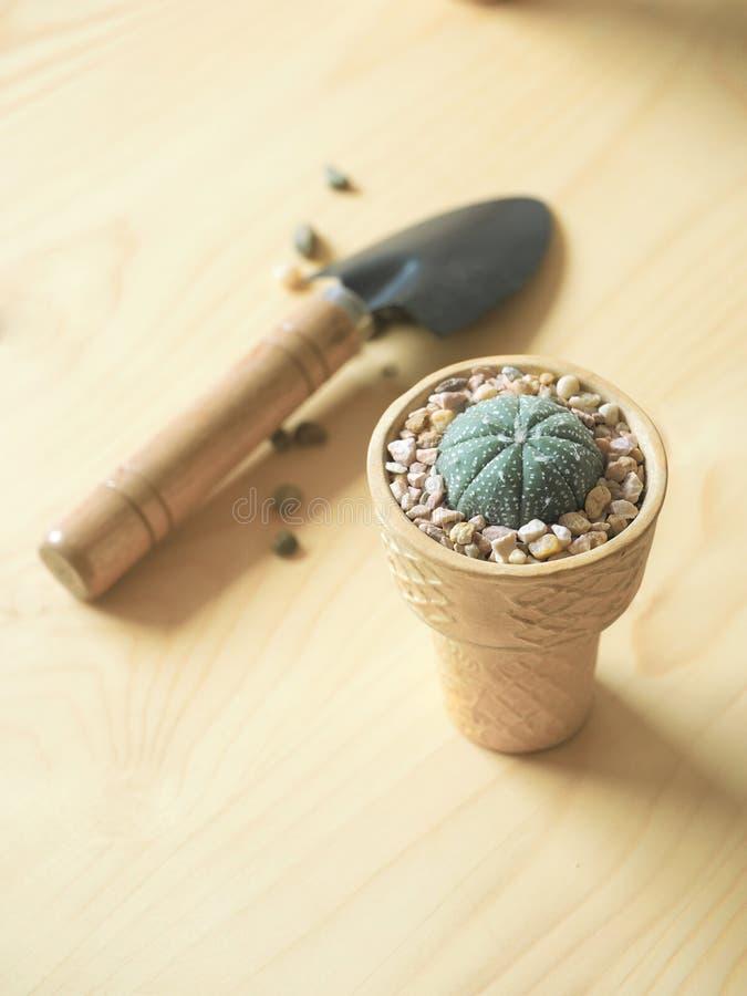 Flowerpot κώνων παγωτού στοκ εικόνες με δικαίωμα ελεύθερης χρήσης