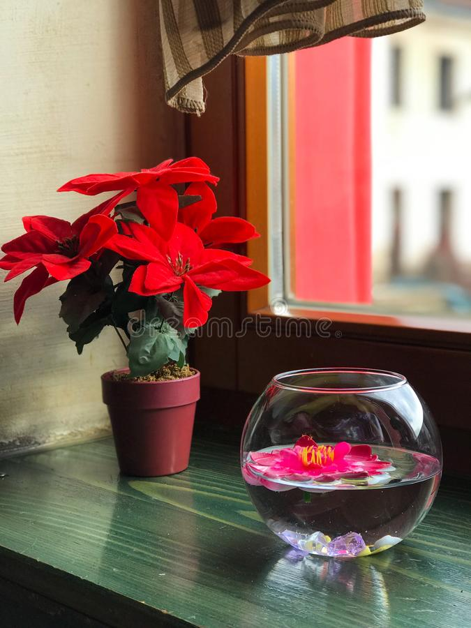 Flowerpot με τα λουλούδια από το παράθυρο στοκ εικόνα