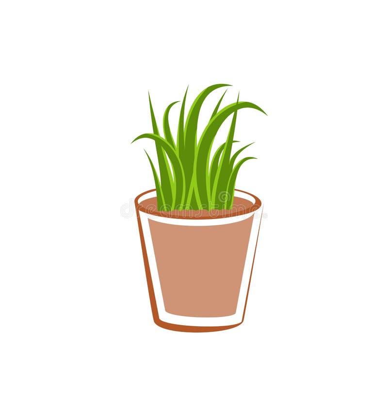 Flowerpot με τις πράσινες εγκαταστάσεις χλόης ελεύθερη απεικόνιση δικαιώματος