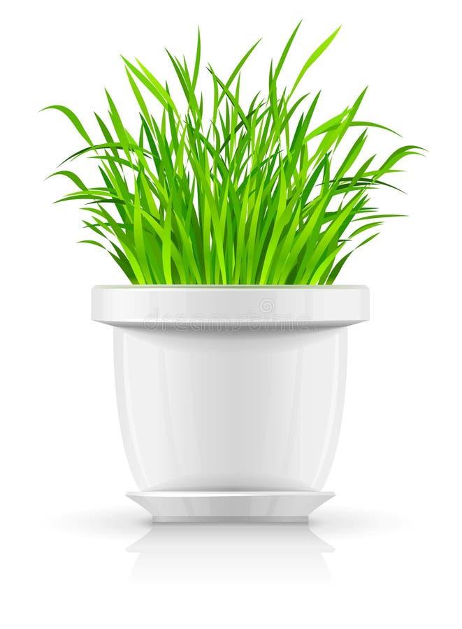 flowerpot πράσινο λευκό χλόης απεικόνιση αποθεμάτων