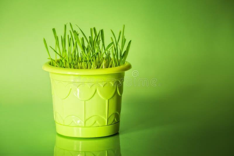 Download Flowerpot χλόη πράσινη στοκ εικόνες. εικόνα από αναπτύξτε - 17058542