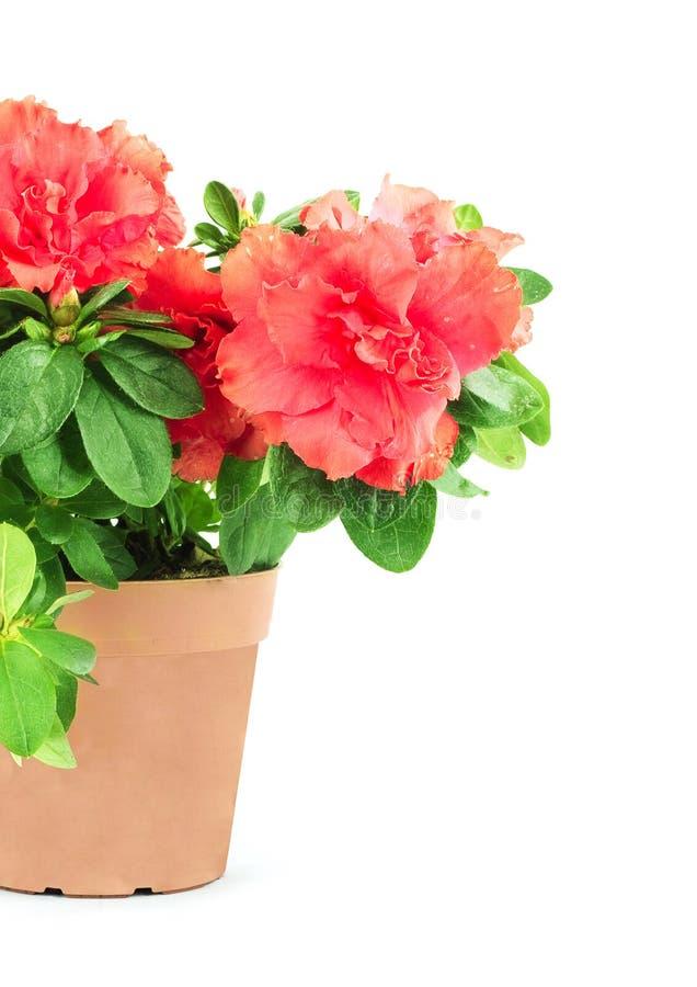 flowerpot цветка стоковые изображения