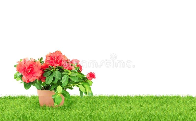 flowerpot цветка стоковое изображение