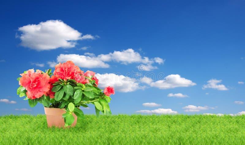 flowerpot цветка стоковые фото