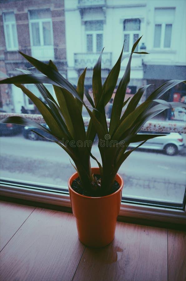 flowerpot стоковое фото rf