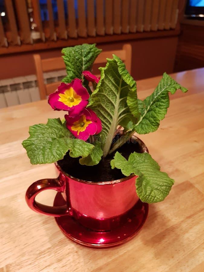 flowerpot zdjęcie royalty free