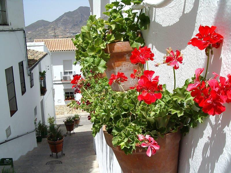 Flowerpot imagens de stock