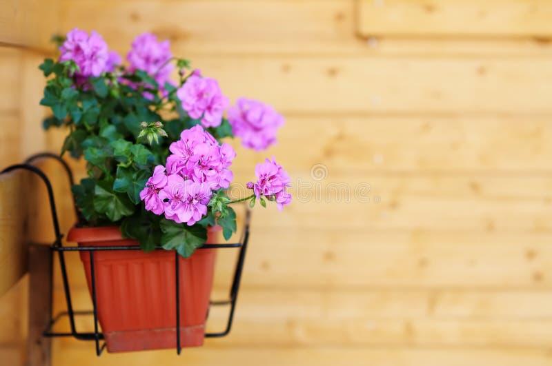 Flowerpot stock photography