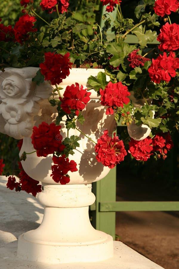Flowerpot royalty free stock image