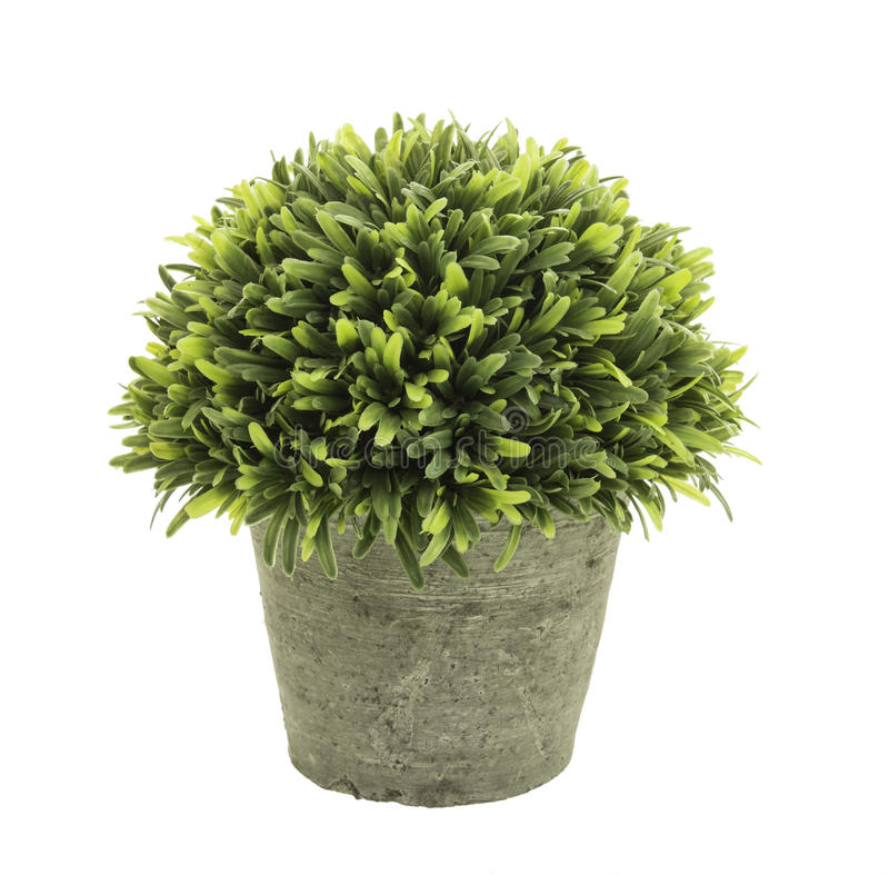 Flowerpot. Decorative grass in flowerpot isolated on white background royalty free stock images