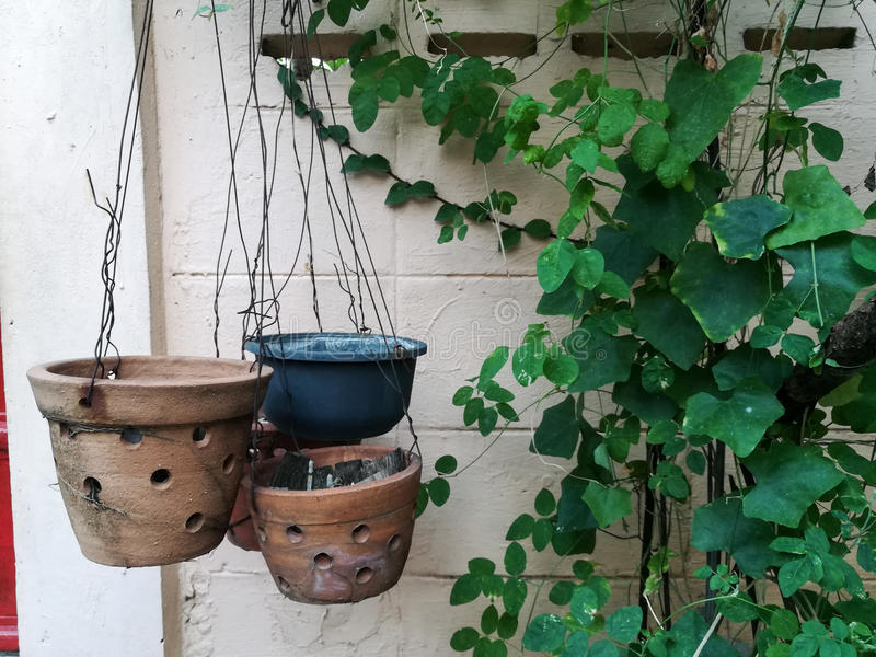 Flowerpot. The empty flowerpot hanging in the garden royalty free stock photos
