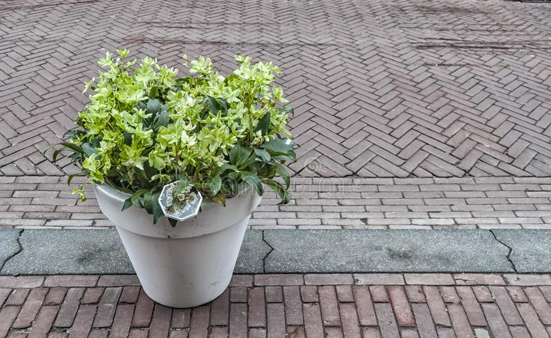 White flowerpot filled with flowers. Flowerpot filled with flowers placed on the sidewalk of a street royalty free stock image