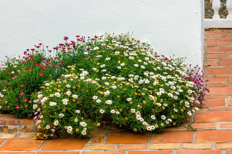 Flowerpot with flowers decorating. A typical mediterranean street royalty free stock photos