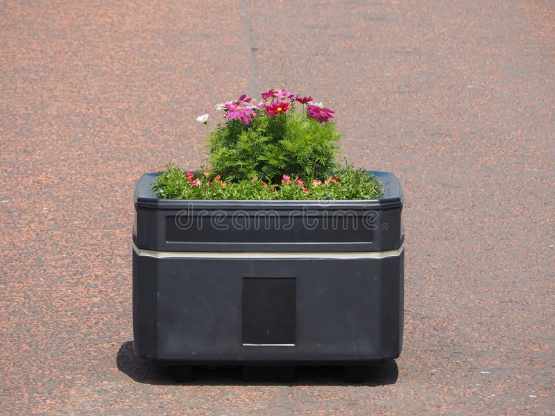 Flowerpot with flowers. Flowerpot with pink white and violet flowers royalty free stock photo