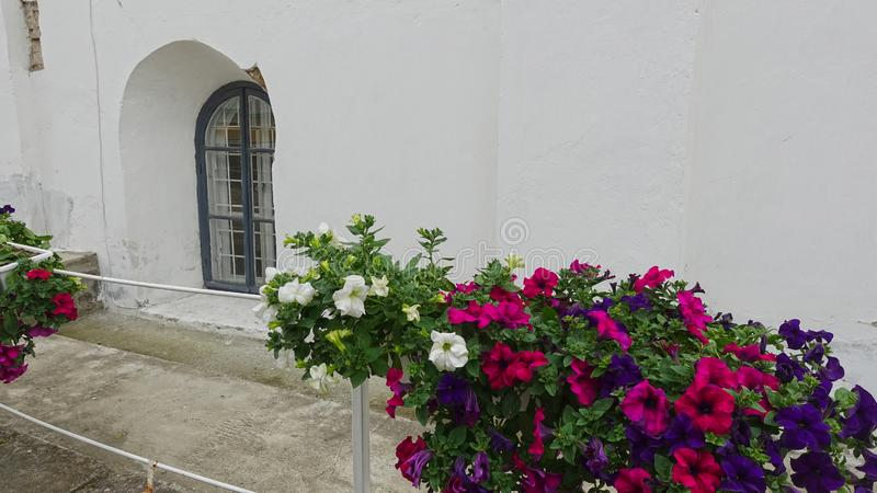Flowerpot with flowers at the monastery wall in Pechersk Lavra. Flowerpot with flowers at the monastery wall in Kiev-Pechersk Lavra royalty free stock photos