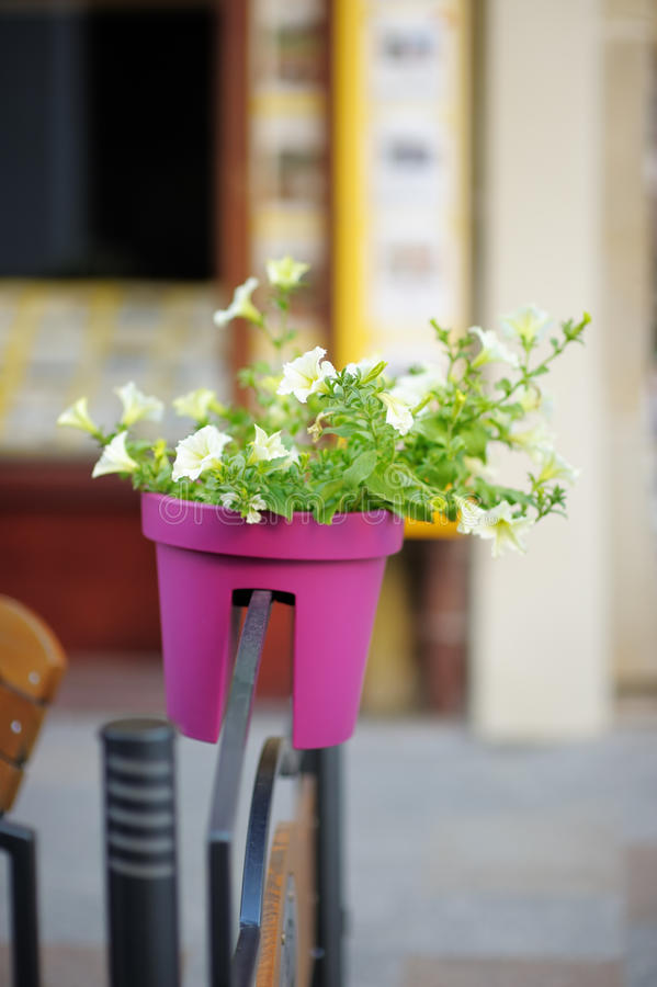 Flowerpot with flowers stock photos