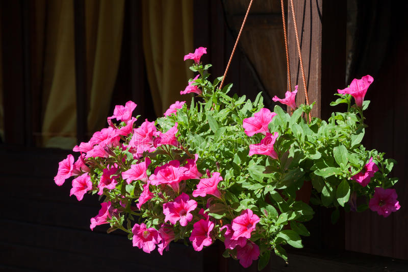 Flowerpot with flowers. Flowerpot with Petunia flowers outdoors stock photos
