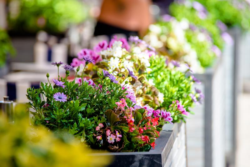 Flowerpot with flowers is on the street. Of the ancient city royalty free stock image
