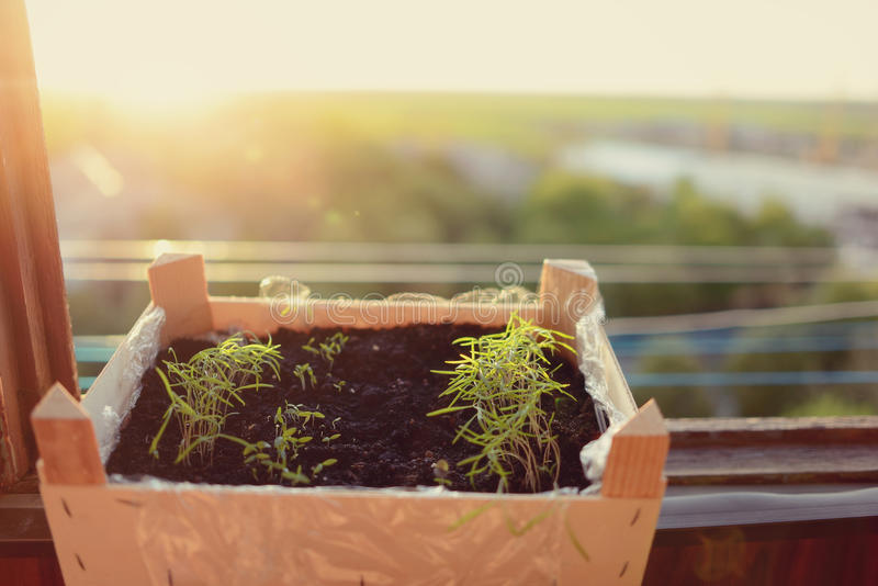 Download Flowerpot grass stock image. Image of grow, agriculture - 40397481