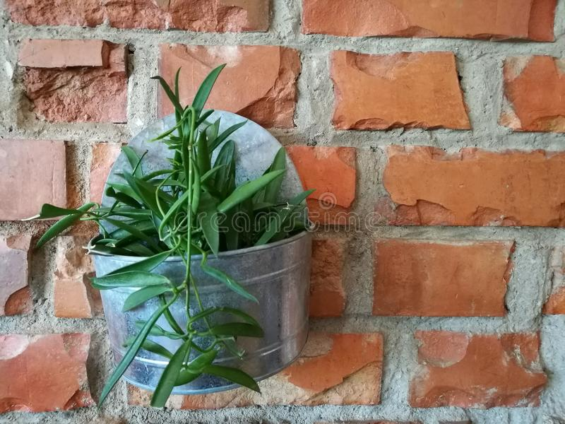 Flowerpot with green plant on the red brown brick block wall background on backyard garden with lighting with blur background royalty free stock image