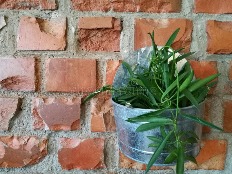 Flowerpot with green plant on the red brown brick block wall background on backyard garden with lighting with blur background, flo stock image