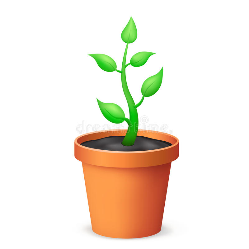 The flowerpot. And growing plant on the white background stock illustration
