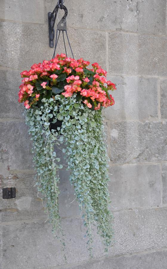 Flowerpot hanging on a Stone Wall from Rue Saint Paul of Centre Ville of Montreal in Canada. On 26th of June 2017 royalty free stock photos