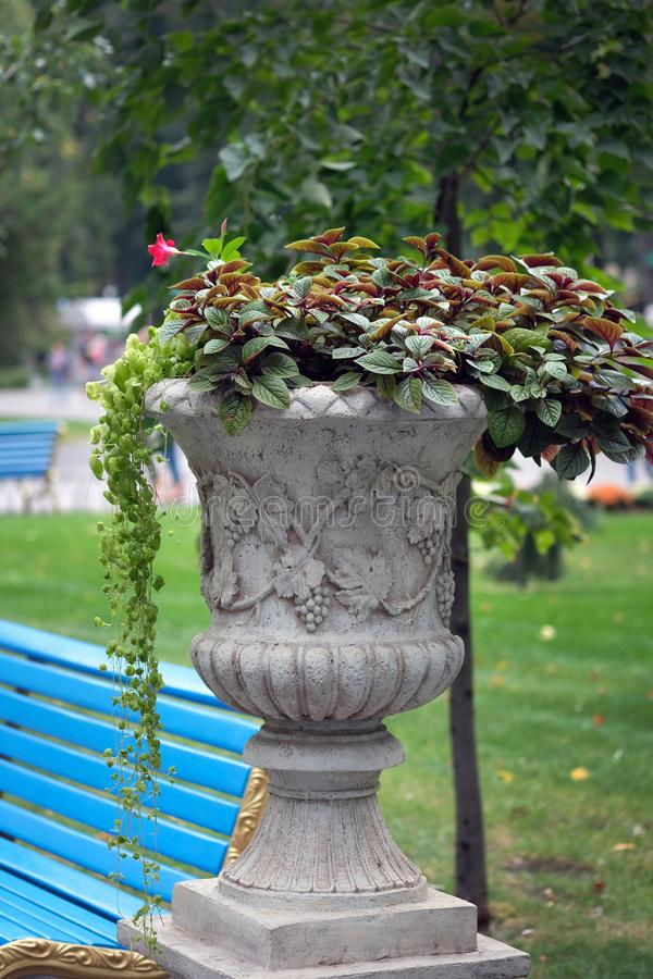 A flowerpot made of stone with flowers planted in it against a blue wooden bench and a lawn. A street flowerpot with flowers stands in a city park. Flowers and royalty free stock photo