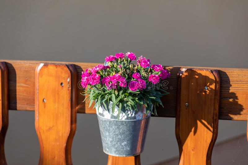 Flowerpot with magenta flowers on wood wall.  royalty free stock photography