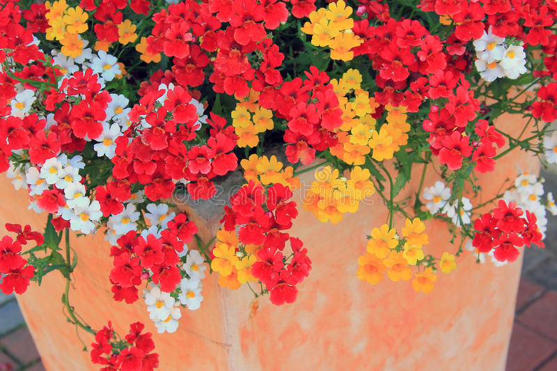 Flowerpot with nemesia summer flowers in mixed colors. Mediterranean flowerpot with nemesia summer flowers in mixed colors stock photos