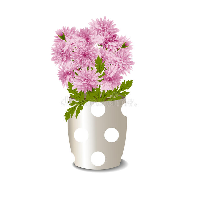 Flowerpot with pink chrysanthemums. Bush of pink chrysanthemums in a flowerpot on white background, vector illustration royalty free illustration