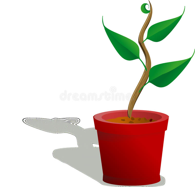 Flowerpot, Plant, Flower, Product Design stock images