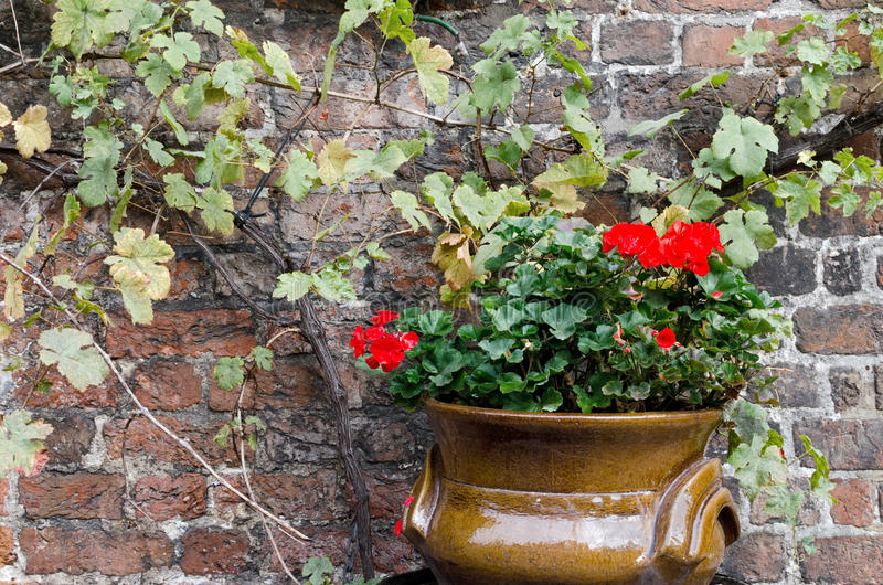 Download Flowerpot Stock Photos - Image: 34271903