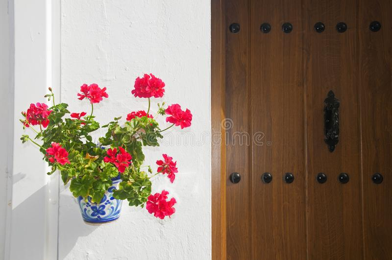 Flowerpot with red flower on the white wall and wooden door royalty free stock image