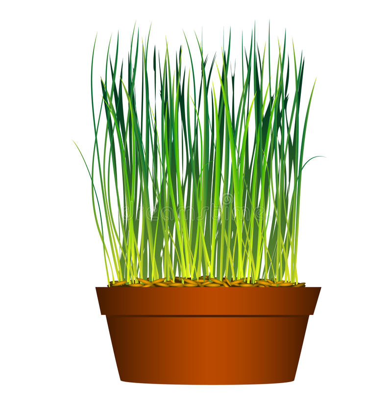 flowerpot trawy ziarno ilustracji