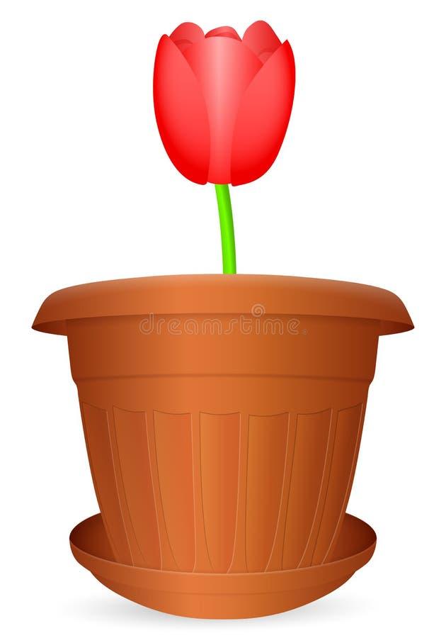 Flowerpot tulip. On a white background. Vector illustration royalty free illustration