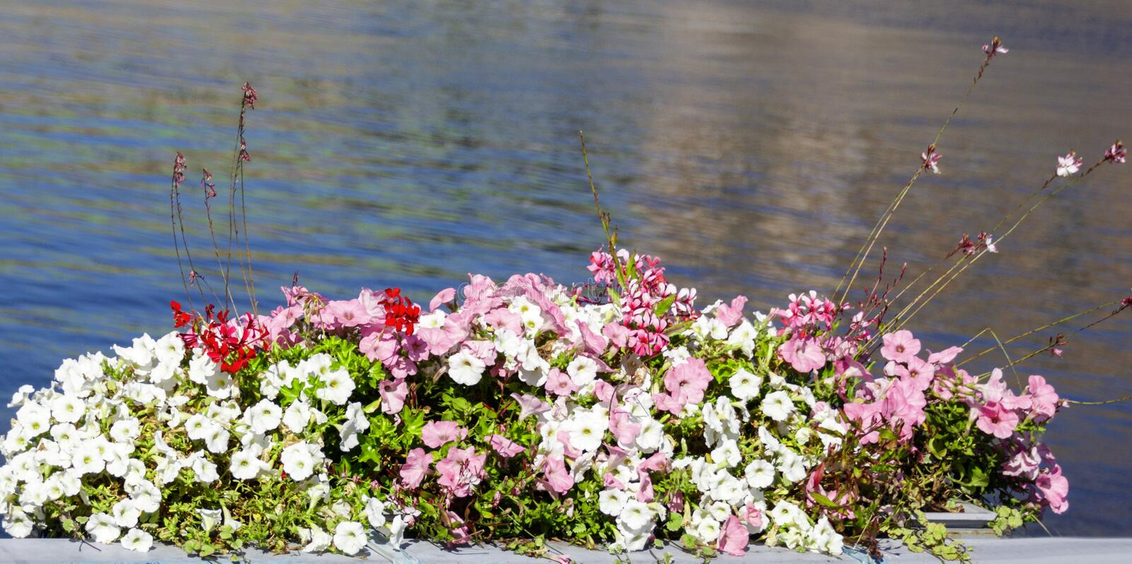 Flowerpot with various flowers. On the background of the sea royalty free stock images