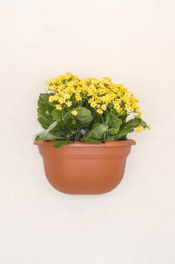 Flowerpot yellow flowers hanging on the wall of a house royalty free stock photo