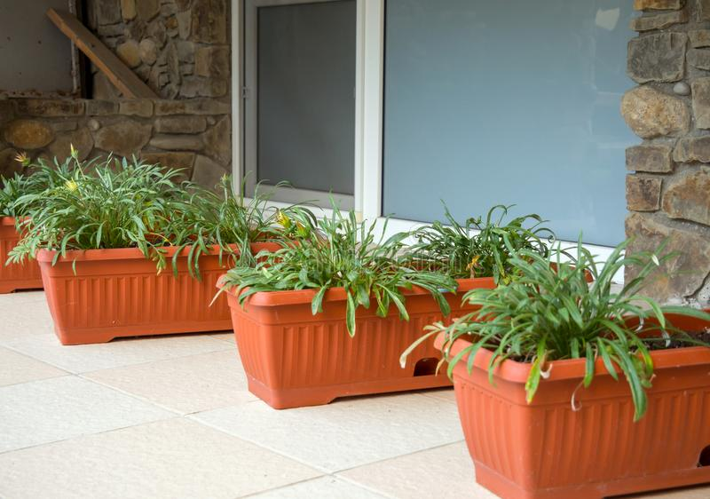 Flowerpots with flowers as decorations at the basement window of a private house.  stock photos