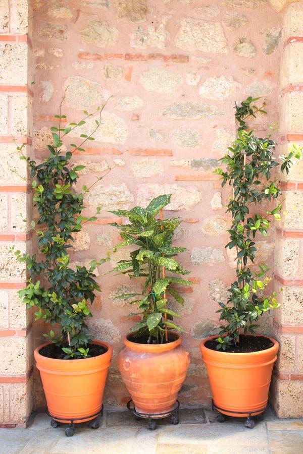 Flowerpots z zielonymi palnts obrazy royalty free