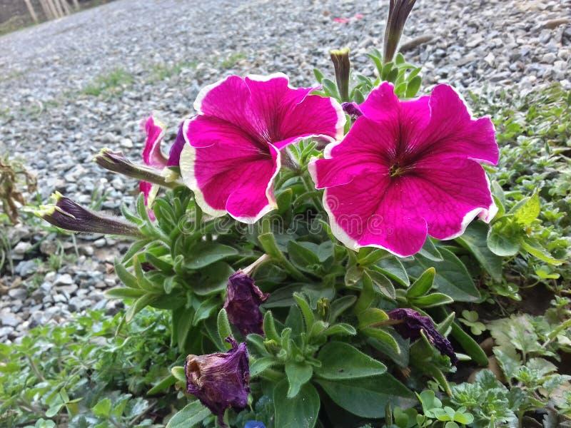 Flowerr fotografía de archivo